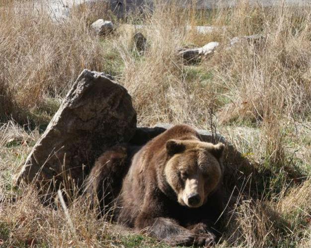 Парк танцующих медведей